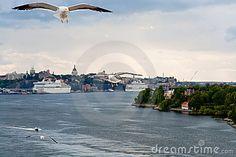 Gaviota en orilla del mar Báltico cerca de Estocolmo