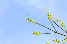#Sternstunden im Frühling dann bitte www.spreewald-hotel-stern.de
