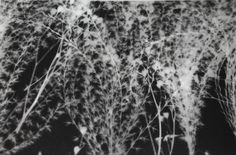 Nature//Darkroom print