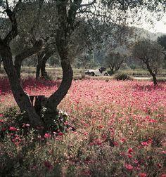 """From """"Lartigue's color photographs"""". Florette dans le Morgan. Provence, mai 1954. Photographie J. H. Lartigue © Ministère de la Culture - France / AAJHL"""