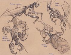 Week 4 is INSECTS! I'm really excited to learn how to draw insects because I really like them :)   UPDATE: Insect Re-Design project -      ...
