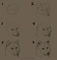 how_to_draw_a_wolf__s_face_by_savannaw-d583qdj.jpg (900×936)