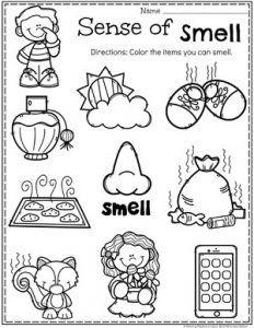 Use Five Senses printable activities from Super Teacher
