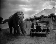 1928 photograph of Tusko the elephant and a Ghram-Paige automobile behind the big top of the Al G. Barnes Circus.  What a neat image!  Thanks Circus World Museum!