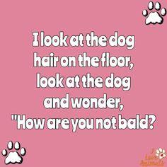 So true! Dog hair everywhere! I Love Dogs, Puppy Love, Cute Puppies, Dogs And Puppies, Doggies, Funny Dogs, Funny Animals, Creepy Animals, Crazy Dog Lady