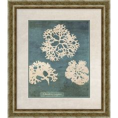 PTM Images Coral I Giclee Framed Painting Print