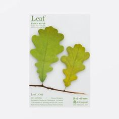 Save 40% on your favorite Leaf Sticky Notes, unique nature inspired sticky notes for your home and office. Use these sticky notes to leave notes or messages. Or you may also use them as bookmarks and decorations. Visit eBay or Amazon to avail of the discount. See the links here https://www.bbbegonia.com/blog/sticky-notes-summer-sale/