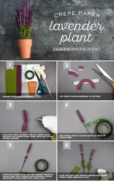 Potted Purple ✨ Lavender is just so lovely! We found a way for you to make your own crepe paper lavender plant and bring this loveliness inside your home. The best part is it's only 6 steps! https://liagriffith.com/crepe-paper-lavender-plant/⠀⠀⠀⠀⠀⠀⠀⠀⠀ *⠀⠀⠀⠀⠀⠀⠀⠀⠀ *⠀⠀⠀⠀⠀⠀⠀⠀⠀ *⠀⠀⠀⠀⠀⠀⠀⠀⠀ #diy #herb #herbgarden #lavender #crepepaper #crepepaperrevival #crepepaperflowers #crepepaperflower #paper #papercut #papercraft #papercrafts #paperlove #diyidea #diyideas #diycraft #diycrafts #diyproject…