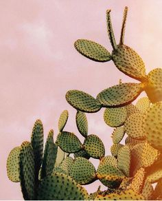 Cactus On Pink Sky Laptop & Ipad Skin by Romana Lilic / Photography - MacBook / Pro / Air Buy Cactus, Cactus Plants, Aesthetic Iphone Wallpaper, Aesthetic Wallpapers, Wall Prints, Framed Art Prints, Cactus Decor, Sky Art, Cactus Y Suculentas