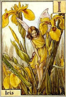 The Iris Fairy. Vintage flower fairy art by Cicely Mary Barker. Taken from ' A Flower Fairies Alphabet'. Click through to the link to see the accompanying poem. Cicely Mary Barker, Flower Fairies, Elfen Fantasy, Fairy Pictures, Vintage Fairies, Iris Flowers, Fantasy Illustration, Fairy Art, Magical Creatures