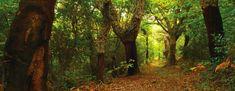 Image result for forêt québécoise