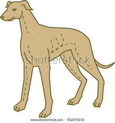 Mono line style illustration of a greyhound dog standing set on isolated white background.  #greyhound #monoline #illustration