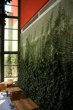 """I love this idea; I want to have a vertical wall in my own home, but would have to install special lighting to accomplish the goal. So...perhaps another day! :) I also want a vertical, living """"spice rack"""" full of lovely herbal and other such edibles."""
