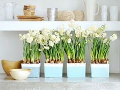 Get Beautiful Winter Blooms by Forcing Bulbs!  Fill your house with gorgeous spring color in the middle of winter.