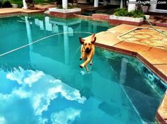 Humorous doggie trying to walk on water!