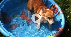 That moment when a dog gets a pool for his birthday! [ADORABLE]