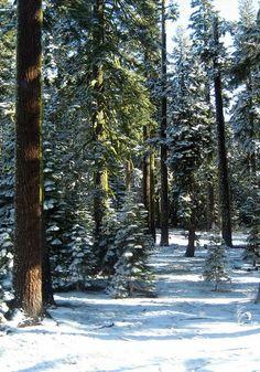 Forest outside Hamstead, through which Aidah and Tavish must flee.   Journey to Landaran: http://www.amazon.com/dp/B00IO7IXSC