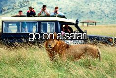 I want to go on an African safari.
