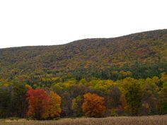 Blue Mountain north of Allentown Pa seasonal change