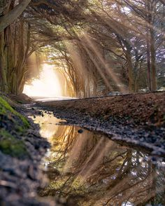 My favorite tunnel of trees north of Fort Bragg, California   - #funny #lol #viralvids #funnypics #EarthPorn more at: http://www.smellifish.com