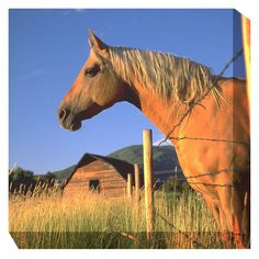 West of the Wind Palomino Sunrise Outdoor Canvas Art - 77716-24