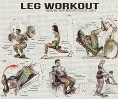 Leg Workout - Healthy Fitness Workout Leg Calves Abs Core Back - FITNESS HASHTAG