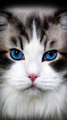 Those eyes! Wow.