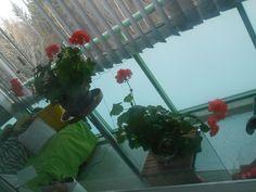 Kukat parvekkeella kauniita vielä vaikka  pakkasta on ollut yöllä -7