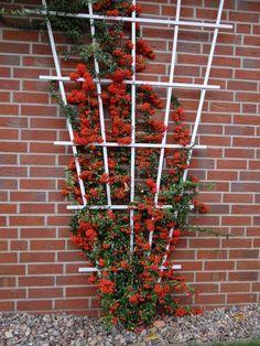 27 Beautiful Backyard Landscaping Design Ideas That You Can Copy Rose Trellis, Cedar Trellis, Diy Trellis, Garden Trellis, Vertical Vegetable Gardens, Vertical Garden Wall, Front Yard Garden Design, Backyard Garden Design, Garden Plant Supports