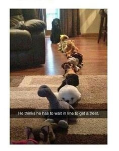 You would do this to Tilly