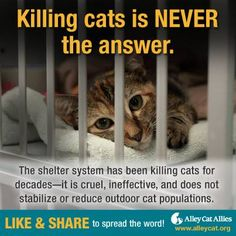 Cats are being killed every day and it's WRONG! Killing cats is NEVER the answer—it won't save birds, it doesn't stabilize cat populations, and it's CRUEL. Please LIKE and SHARE with your family and friends.