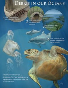 A great infographic that shows why it's SO important to pick up trash everywhere you go! More info on @MCleanBeaches