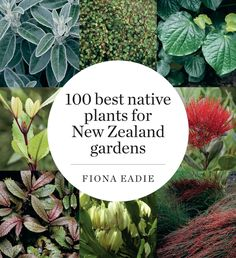 Buy 100 Best Native Plants for New Zealand Gardens by Fiona M. Eadie at Mighty Ape NZ. Since its first publication, this book has been an indispensable guide for gardeners wishing to use New Zealand plants. Now extensively revised, it fe. Garden Landscape Design, Garden Landscaping, Coastal Landscaping, Landscaping Design, Endangered Plants, Coastal Gardens, Tropical Gardens, Tropical Plants, New Zealand Landscape