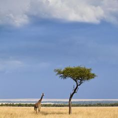 Set Off On A $1 Million Safari, the Journey to Nature's Edge by Natural World Safaris lasts 111 days in total, covers 12 countries, offers a chance to see 18 of the world's most vulnerable species and $100,000 per booking is donated to a conservation fund. Spot white rhinos by helicopter in Kenya, search for tigers in India, see polar bears in the Arctic and track down giant tortoises in the Galapagos Islands.