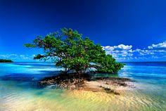 Lone Mangrove on Sandbar - Mangrove Art & Photography, Islamorada, Florida Fine Art & Photography - Alan S. Maltz Gallery (305) 294-0005