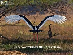 Bharatpur National Park is one of Asia's finest birding areas, with over hundreds of resident and migrant birds.   Bird safari makes for the most surreal experience at Keoladeo National Park. For nature lovers it is one of the best things to do in Rajasthan. Catch the birds live in action. Discover rarest species of birds, which migrate to India from neighboring countries. #bird #birds #birdwatching #boutindia #wildlifetours #wildlifesafari #rajasthan #bharatpurbirdsanctuary