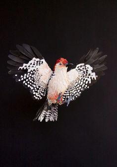 Birds of Florida - paper sculptures by Diana Beltran Herrera