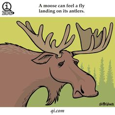 Losi cítí, že jim přistane moucha na parohu. Kromě toho slyší růst mech a jejich moč je halucinogenní.   20 pikantních faktů ze života zvířat