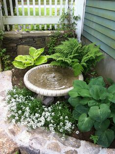 Classical Fountain and Birdbath