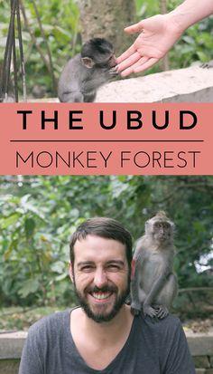 THE UBUD MONKEY FOREST