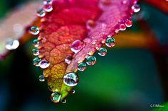 waterdrops on colorful leaf