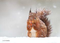 In the Falling Snow de dgwildlife