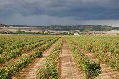 Finca Vega Sicilia