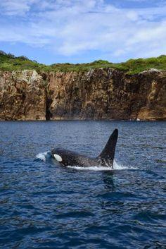 Marine Reserve at Abel Tasman National Park in New Zealand