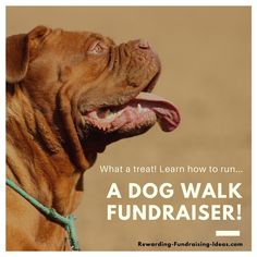 A Dog Walk Fundraiser - A Peer-to-Peer (a-Thon) style fundraising idea. Cooperative Education, Ch Spurgeon, Learn To Run, Boston Terrier Dog, Large Dog Breeds, Training Your Dog, Dog Walking, Animal Shelter, Pet Supplies