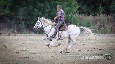#horse #camargue