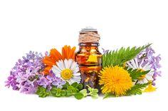 Apesar dos pólenes, existem muitas variedades botânicas que têm o condão de prevenir e minimizar o impacto de infeções e alergias, além de ajudar a tratar outros problemas de saúde. Saiba quais