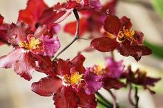 Everything You Should Know About Growing Orchids Indoors: Growing Orchids: The Basics