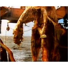 In the spring of 1977, off the coast of New Zealand, a Japanese fishing trawler accidentally netted a decaying carcass of a gigantic creature 30 feet long, with spines down its neck and back weighing 4,000 pounds. As it was hauled up on to the boat, the fishermen photographed the creature which resembled a type of an aquatic dinosaur known as a pleisosaur, a dinosaur species that supposedly went extinct 65 million years ago.