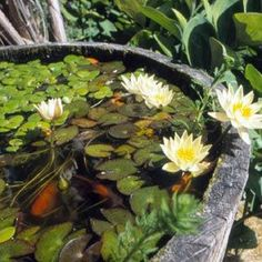 Toying with the idea of a (removable) water feature - maybe with yabbies & small fish. Container Pond, Container Water Gardens, Ponds Backyard, Garden Pool, Small Water Features, Fish Ponds, Garden Inspiration, Garden Ideas, Small Space Gardening